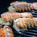 Spiny Lobster Langustenschwanz