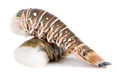 Test 2,5kg Langusten klein (Gastro)