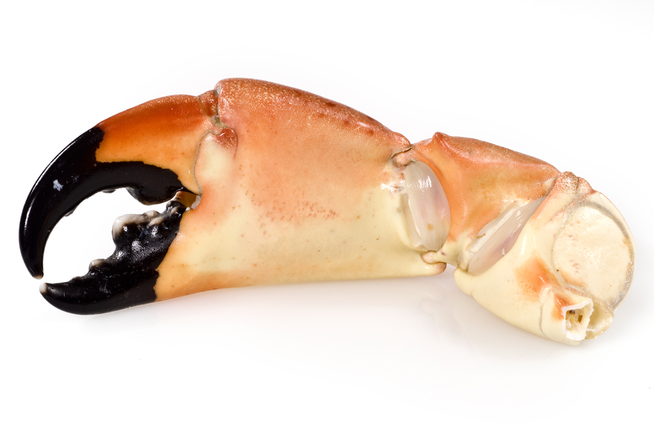 Florida Stone Crabs – Spiny Lobster | Gourmet Products